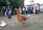 Vollbüttel: Erlös aus Hoffest fließt in den Tierschutz